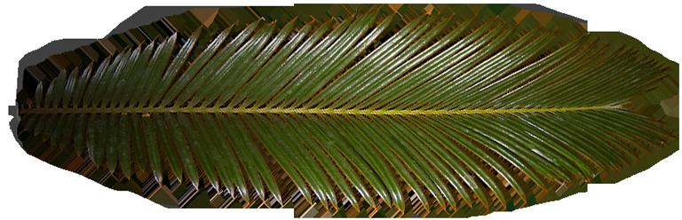 palmegren